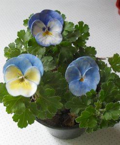 Ceasuri, ghivecele cu flori, decoratiuni